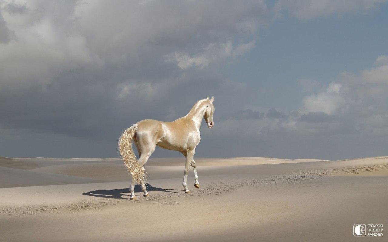 Красивая лошадь, редкой изабелловой масти