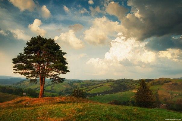 «Предчувствие грозы». Август 2012 года. Карпаты. Автор фото: .