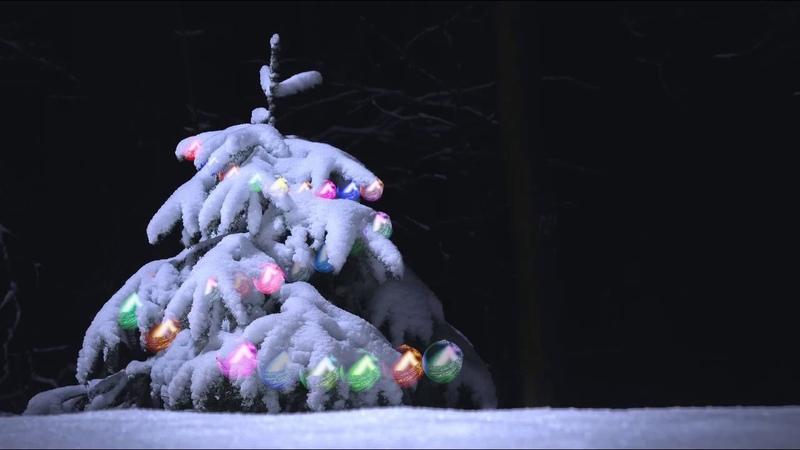 Новогодняя елка Зимний лес Гирлянды Футаж FOOTAGE