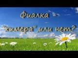 Фиалка -