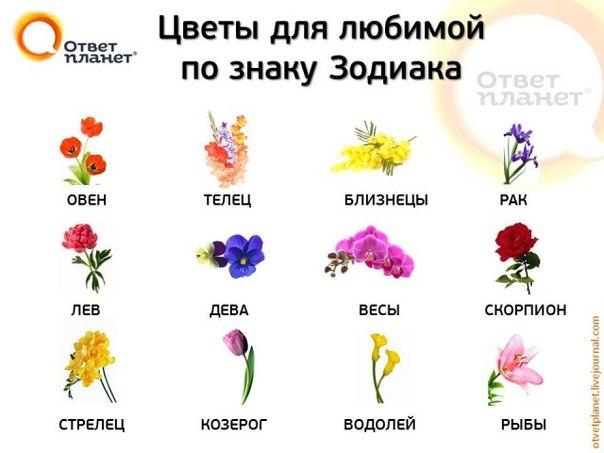 под водолей какие знаком цветы любят люди