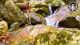 Расслабляющий Звук Горного Ручья. 15 Минут Природы Для Релаксации
