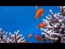 Релакс видео подводный мир