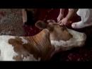 Употребляя мясо - ты берёшь на себя ответственность за это