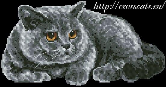 Британский кот схема для
