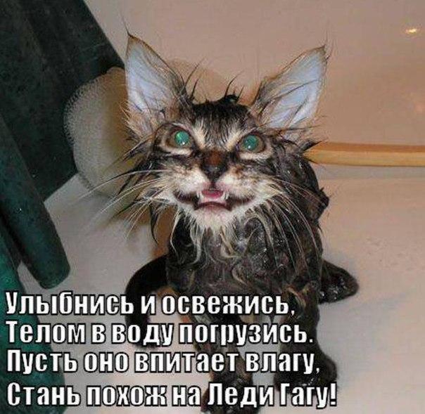 http://cs407922.vk.me/v407922589/647e/QNs6ZW-Fxu0.jpg