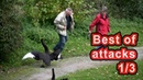 Christmas special Best of Swan Attacks 1 3 Schloss Ringenberg angry swan attacks
