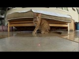 Остросюжетный ролик про котов и лазер