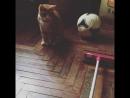 Котику купили ошейник помыла окна Спасибо за такой милый подарок Смотрите как он вырос