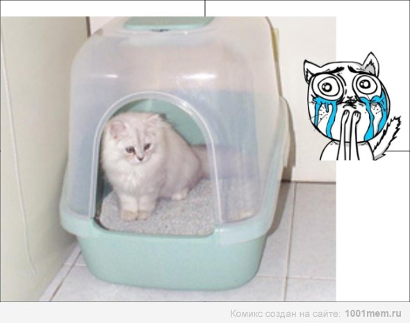 Домик для кошки туалет