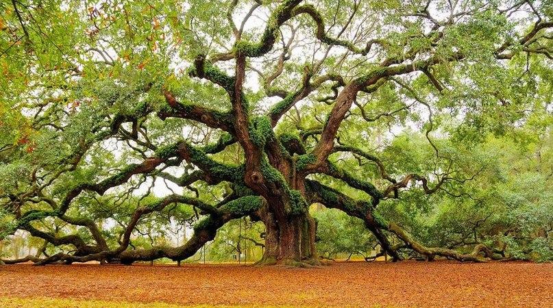 Картинки по запросу Духи деревьев.