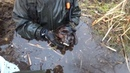 Нырнули в болото и нашли без вести пропавших солдат, раскопки на металлоискатель и магнит