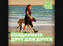 Война объединила собаку и ее хозяйку