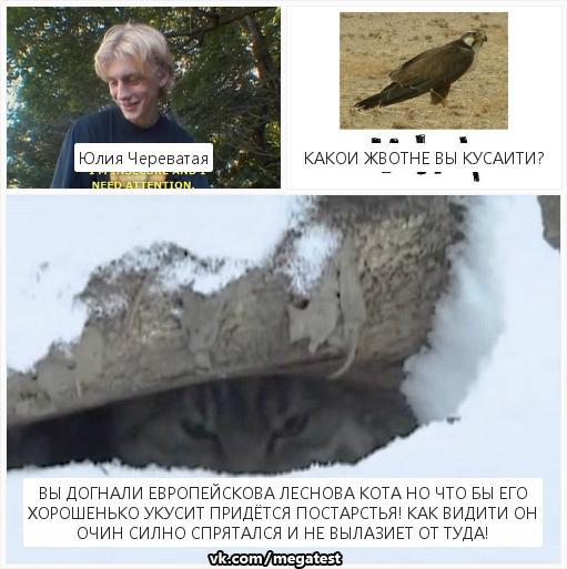 Юлия Череватая | Калининград