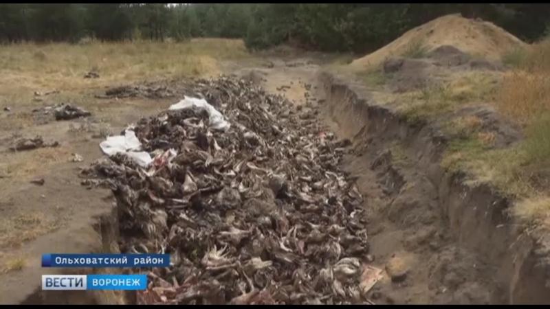 Жители воронежского села обнаружили в лесу сотни трупов животных