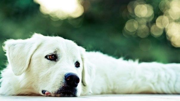 Часто один взгляд собаки заменяет миллионы пустых человеческих слов.