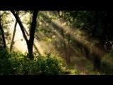 Константин Беляев - Чудный лес под солнцем зреет