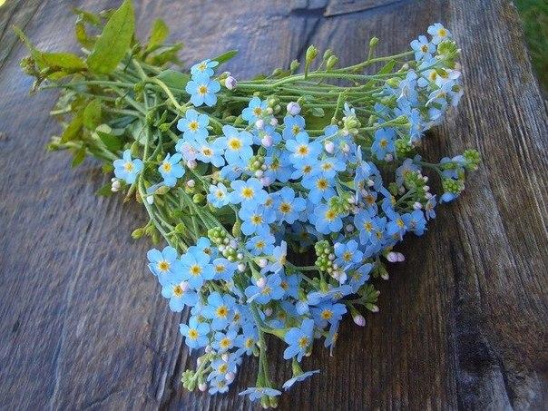 Нежный букет голубых незабудок на деревянной скамье.