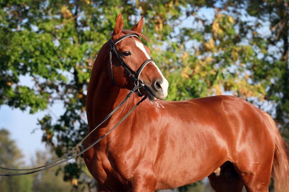 лет крутая лошади картинки донская роза