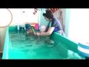 Хотите что бы Ваш ребёнок чувствовал себя уверенно и безопасно в воде, тогда мы будем рады видеть Вас на занятиях в нашем теплом