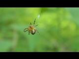 плетет паутину