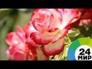 Петербургский Летний сад стал ботаническим - МИР 24