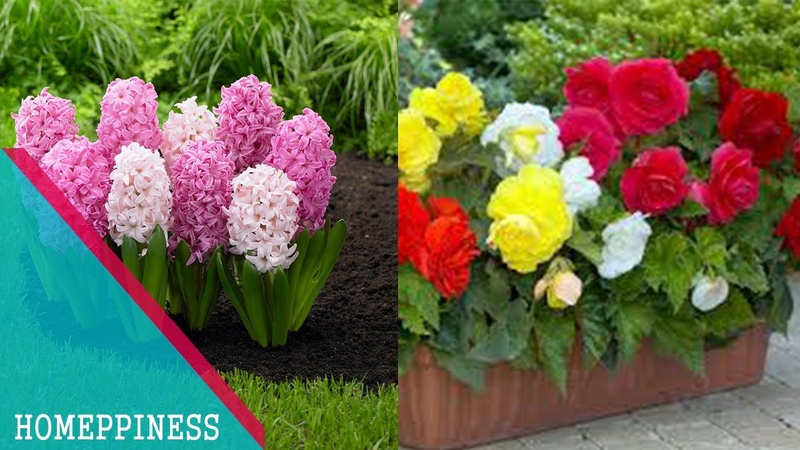 MUST WATCH Top 10 Flowers For Balcony Garden