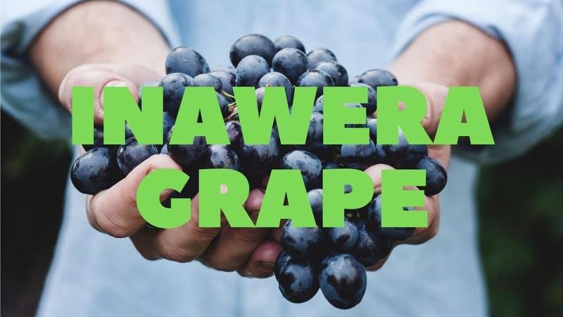 Самозамес и Миксология. Inawera Grape