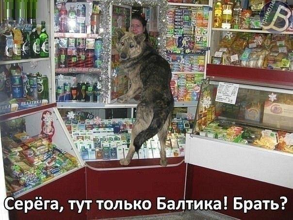 http://cs14112.vk.me/c7008/v7008340/32ce/dndp_rPo3Hg.jpg