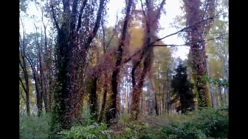 Осень в парке вампиров продолжаю поиски вампира