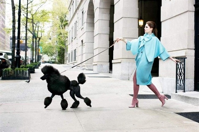 Street Style Dog