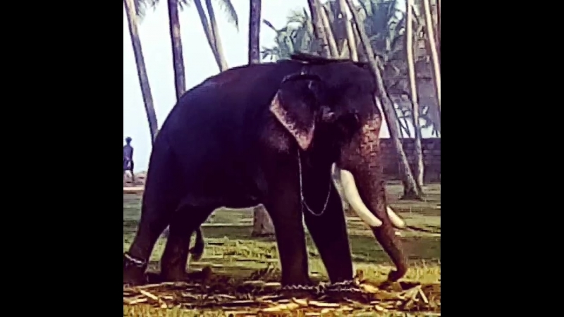 привет из Кералы