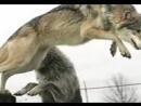Vidmo_org_Grustnoe_video_pro_VOLKOV__176.3gp