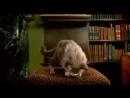 Пьяный кот 🐈 😂😂