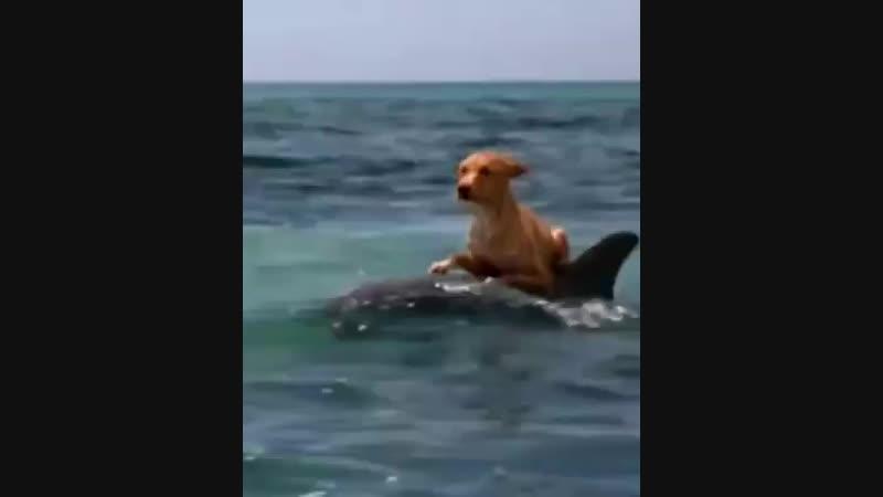 Собакин и дельфин!