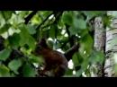 Музыка леса. Пение птиц