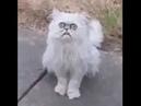 Найден самый страшный кот, взгляд которого вселяет ужас