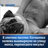 """Блокнот Волгоград Новости📰 on Instagram: """"На долю пожилого джентльмена выпали жуткие страдания – болезнь и предательство хозяев. Однако благодаря в"""