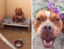 Фото собак до и после приюта, которые доказывают, что в нашем мире осталось место для добра…