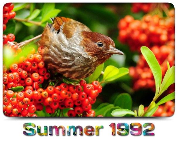 Наедине с природой: райские птицы.