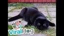 Cute Cat Sees Something Spooky ViralHog