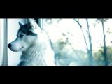 Вера Полозкова - Вечерняя