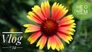 Не о чём: влог без денег 24/7 не в деньгах счастье - но для счастья их не хватает фоточки цветочки