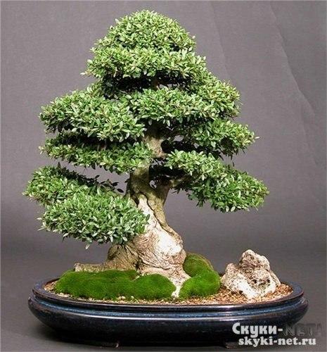 Как сделать маленькое дерево из бисера