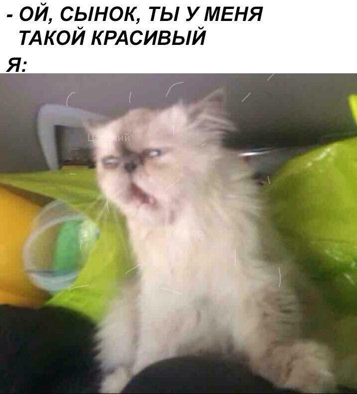 Mi9HxCN4kKs - Как заставить кота мыть посуду