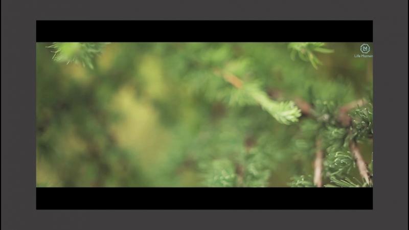 Красивая история любви! Чтобы быть в главной роли – закажите видеосъемку свадьбы в студии Life Moments.