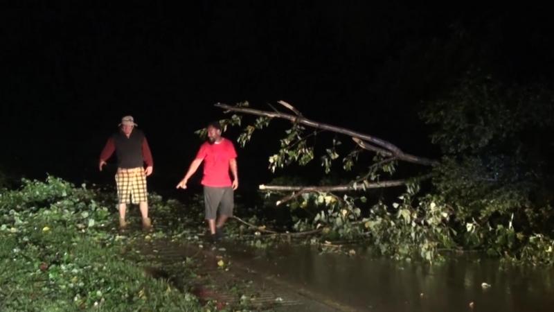 Дерево, поваленное ураганом «Френсис», заблокировало магистраль