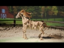 Ugears Horse-Mechanoid. Exclusively on Kickstarter