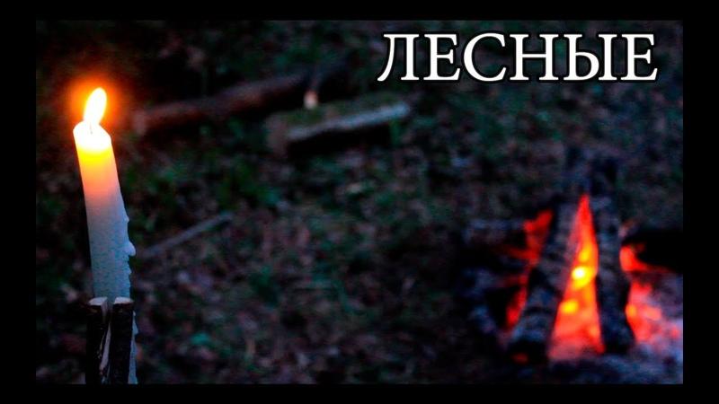 Бушкрафт Свечи в лесу Примитивный тостер