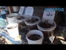 Власти Рязани хотят закрыть рынок в Канищеве мнение горожан